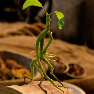 2-bowtruckle